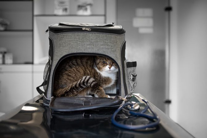 Katzen man woran erkennt eine schwangerschaft bei Symptome einer