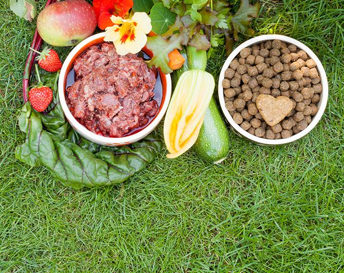 Energiereichere Nahrung für die Hündin